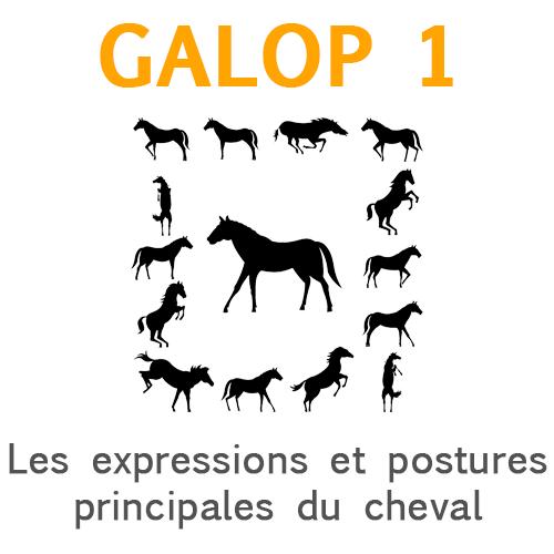 Les expressions et postures principales du cheval