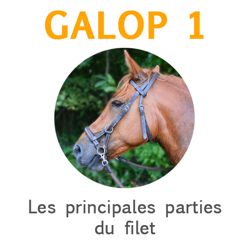 Les principales parties du filet