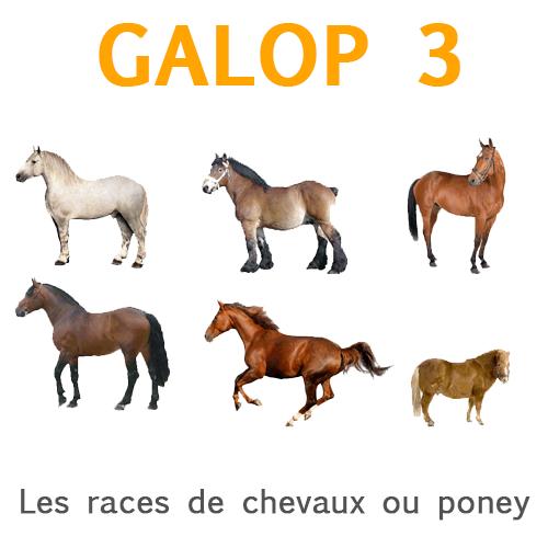 Races de chevaux et de poneys