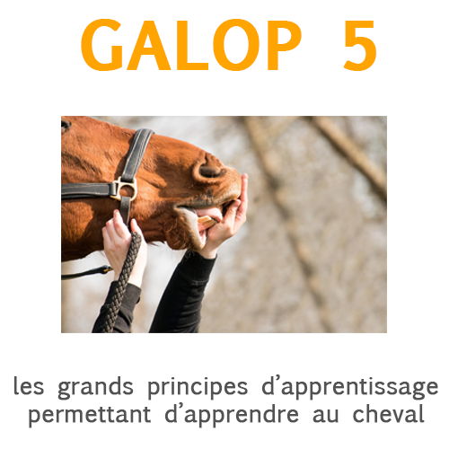 Les grands principes d'apprentissage
