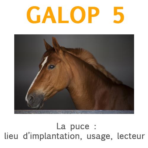 La puce électronique ou transpondeur du cheval