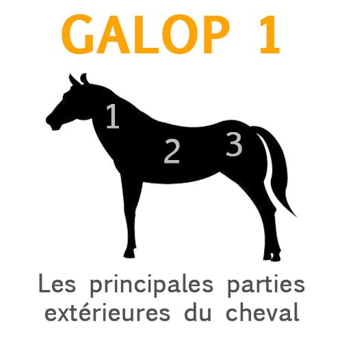 Les prinicpales parties extérieures du cheval