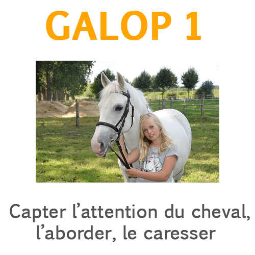 Capter l'attention du cheval
