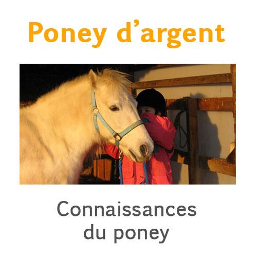 Poney de bronze connaissances du poney