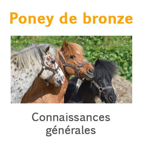 Poney de bronze connaissances générales